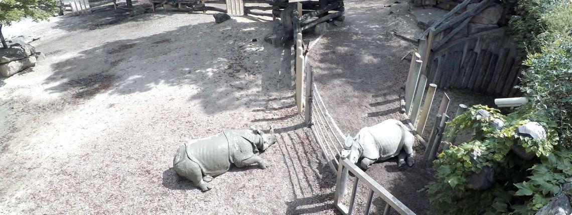 Nosorožce