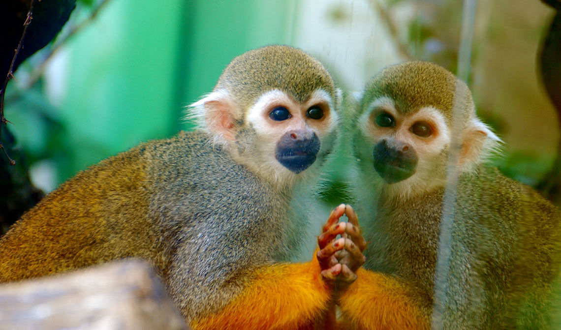 ZOO Zlín, pavilón opíc