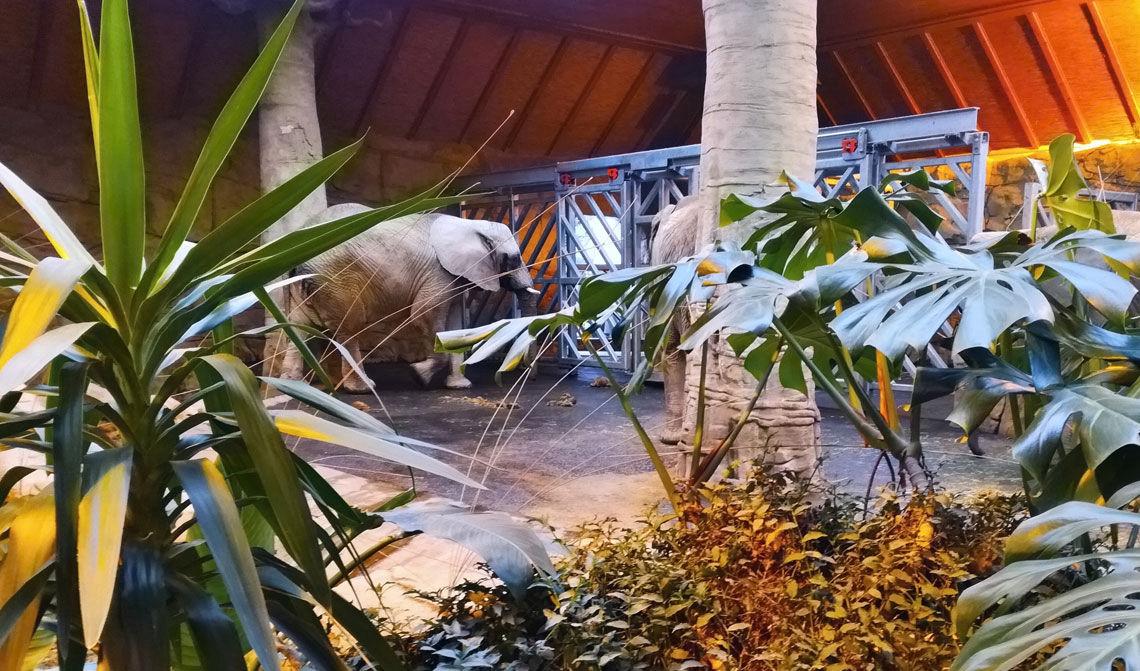 ZOO Zlín, pavilón slonov